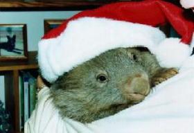 Christmas Wombat GigCity Edmonton